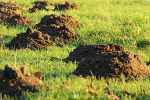 9 Animals That Dig Holes in Yards (With Pictures)