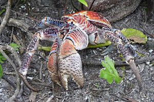 15 Examples of Crustaceans (With Pictures)