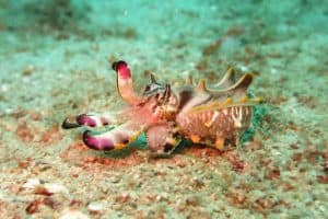 4 Types of Cephalopods (Pictures)