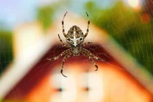 Do Spiders Eat Ants? - Some Do.. But Not All