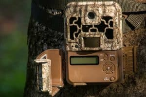 Best Backyard Wildlife Camera (Top 5 Trail Cams)