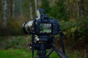 Best Tripods For Wildlife Photography (Top 6 Options)