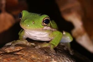 How To Attract Tree Frogs To Your Yard (7 Tips)