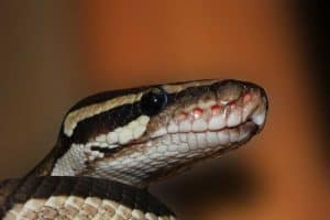 What Is Considered An Exotic Pet?