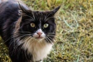 How To Tell if a Cat is Feral - 6 Things To Look For