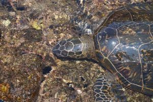 Sea Turtles in Florida