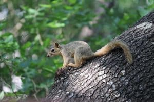 20 Awesome Facts About Squirrels