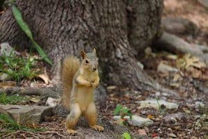 How To Attract Wildlife To Your Yard (9 Helpful Tips)