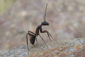 Does Vinegar Keep ants Away?