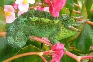 9 Examples of Reptiles That Can Change Colors