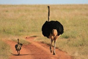 10 Flightless Birds That Evolved To Live Life On Land