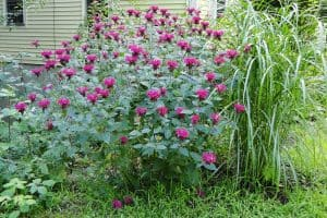 13 Plants That Keep Animals Out Of Gardens