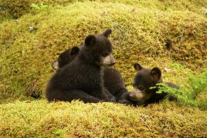 10 Cool Facts About Bear Cubs