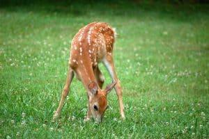 Do Ultrasonic Deer Repellers Work?