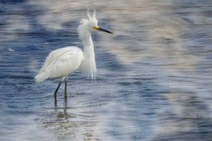 20 Unique Birds with Long Legs (With Pictures)