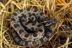 Dangerous Wildlife in Tennessee (9 Things)