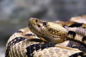 When are Rattlesnakes Most Active?