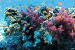 Is Coral a Plant or Animal?