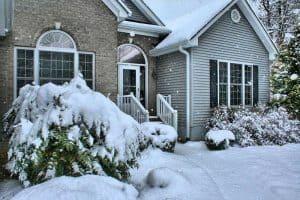 20 Common Winter Pests That Invade Homes and Yards
