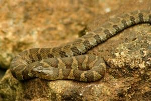 6 Types of Water Snakes in Michigan (Pictures)