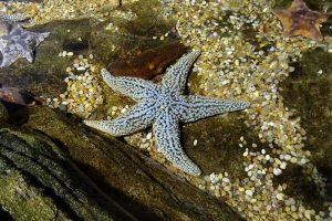 12 Examples of Echinoderms (With Pictures)