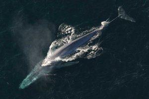 Where Do Blue Whales Live?