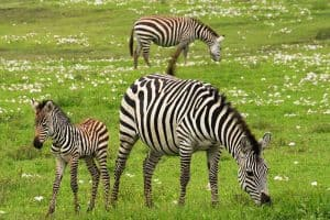19 Examples of Herbivores (With Pictures)