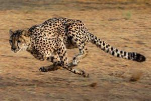 The 15 Fastest Animals in the World (By Sea, Land, & Air)