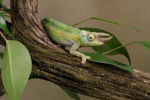 7 Problematic Invasive Species in Hawaii (Pictures)