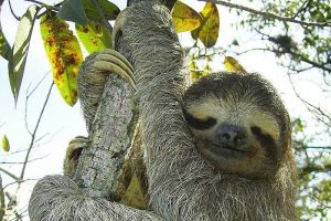 14 Examples of Arboreal Animals (With Pictures)