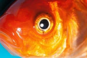 14 Types of Fish With Big Eyes