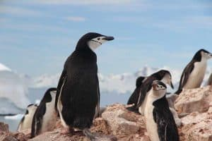 15 Animals That Live in Antarctica (With Pictures)