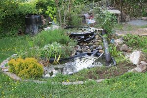 11 Fish That Can Live in an Outdoor Pond (Pictures)
